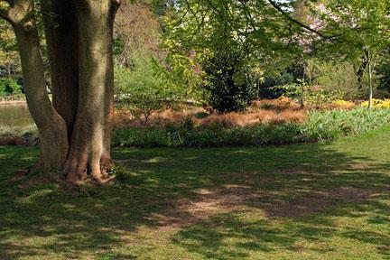 tree-shade